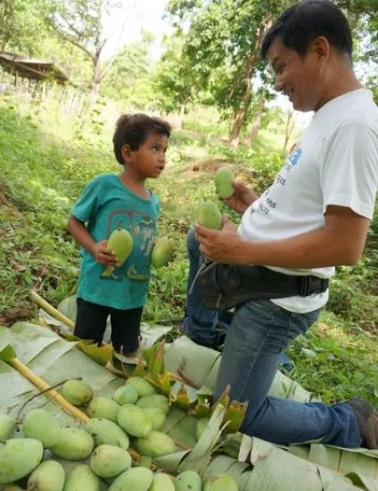 A father teaches his son about harvesting mangoes - Photo: Fr Shay Cullen